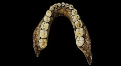steinalder-tannstilling